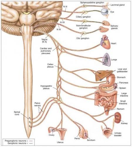 Может ли грыжа позвоночника влиять на работу кишечника